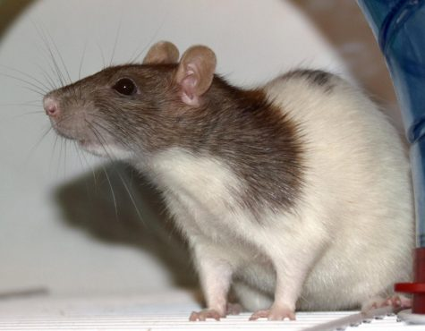 A Year of the Rat: The Top 10 Rats of 2020 (and 2021)